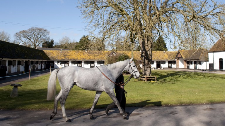 Seven Barrows, now home to champion trainer Nicky Henderson, was restored to greatness by Peter Walwyn