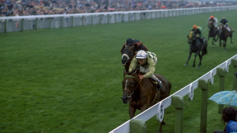 Wondermare Dahlia finished an admirable third in the 1975 King George