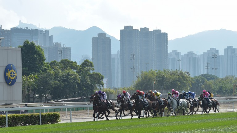 The action takes place at Sha Tin on Saturday