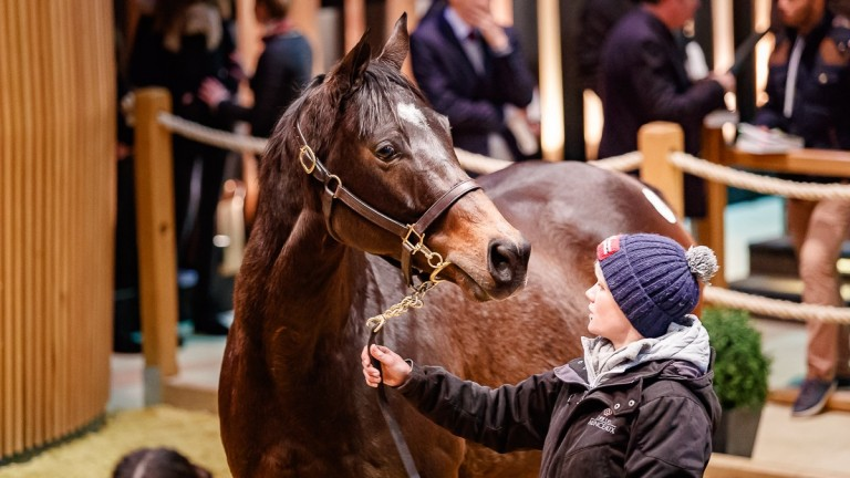 Phiz: well-related daughter of Galileo is headed to Minster Stud