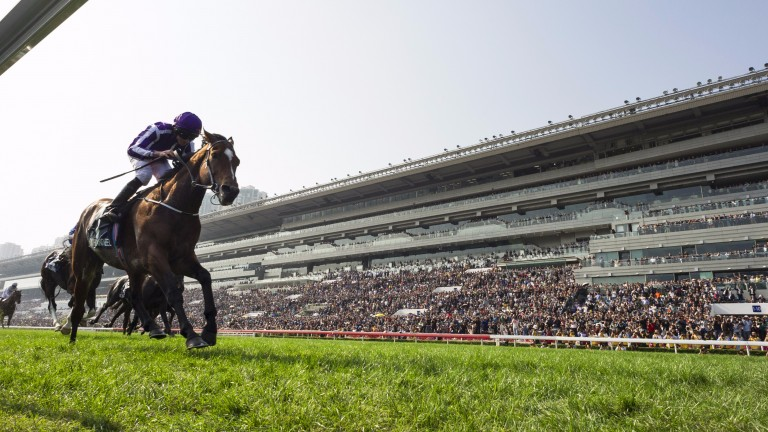 Highland Reel: the recently retired globetrotter has a brother who has been entered in the Epsom showpiece