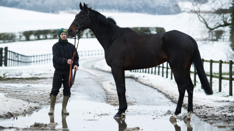 Ice bites: a gorgeous shot of the King George favourite Might Bite alongside his groom Dave Fehily in the snowed-up valley yesterday