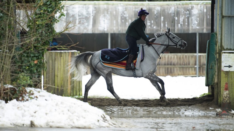 Mad for it: Baden seems to be relishing the snowy conditions at Seven Barrows