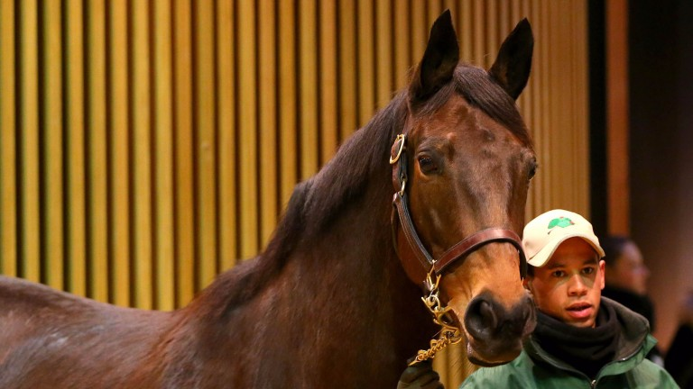 Zaidiyna: Azamour mare exchanged hands for €82,000 on Monday