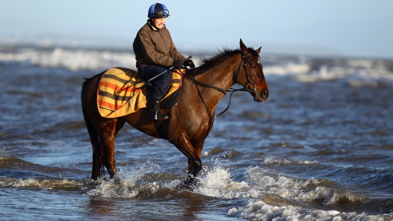 Flemenstar and Peter Casey enjoy a walk into the Irish sea on the beach near Gormanstown