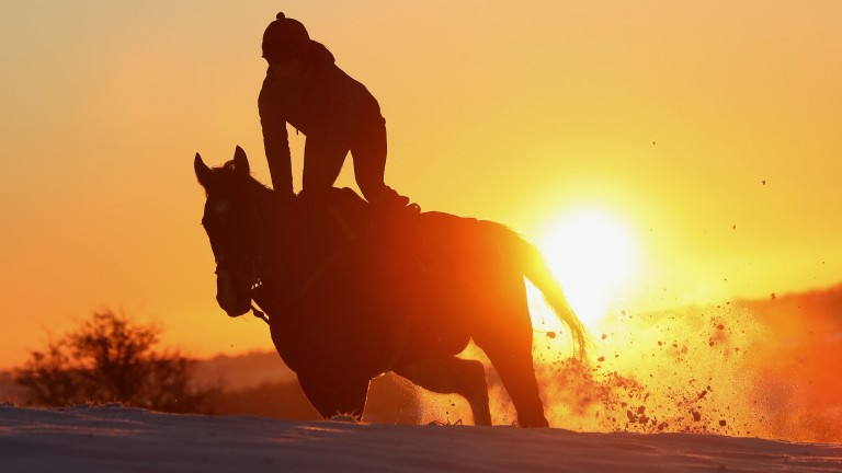 Snow easy work: a horse at Fergal O'Brien's ploughs his way through the gallops early morning