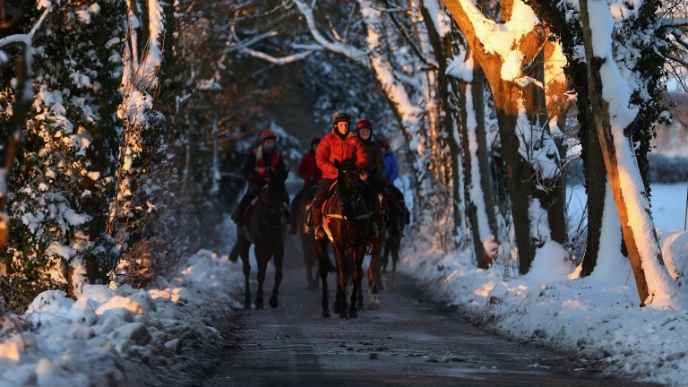 Through the woods and the trees: Fergal O'Brien's first string return to their stables