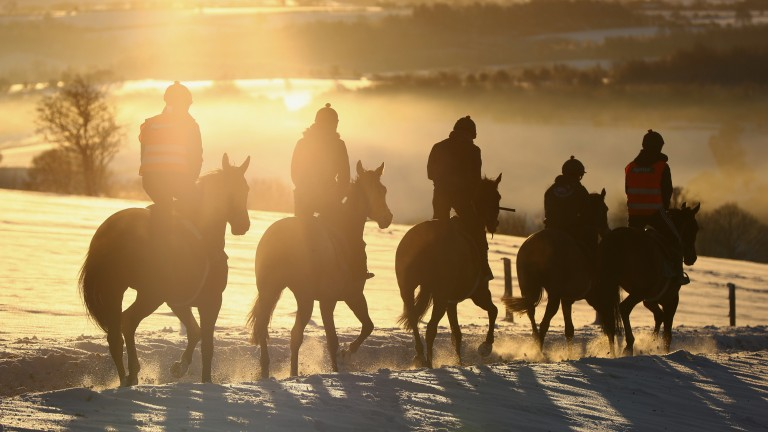 Walk on the cold side: the horses don't mind the early-morning snow during first lot