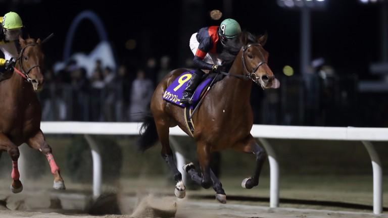 Le Vent Se Leve runs out an easy winner at Kawasaki racecourse
