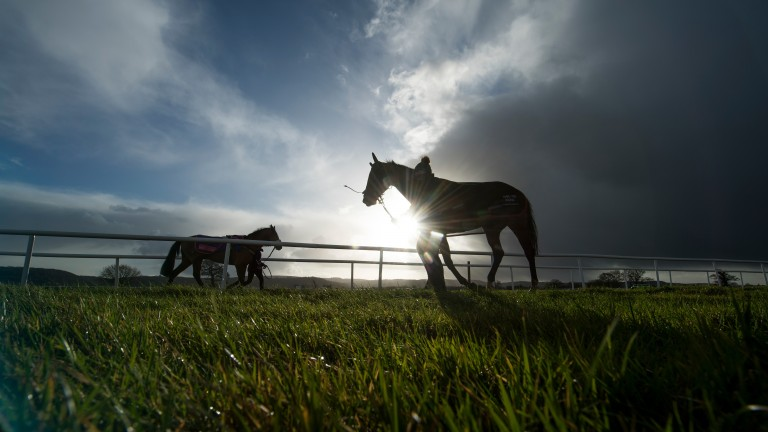 Picture perfect: horses are led to and from the racecourse stables
