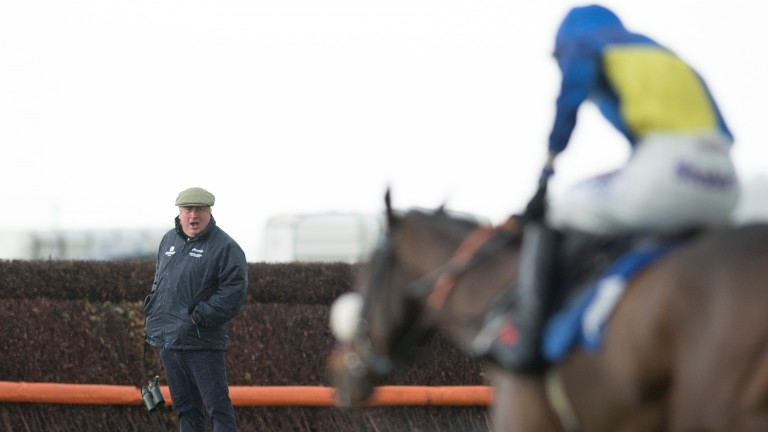 Interested observer: Paul Nicholls watches on as Brahms De Clermont wins the opener