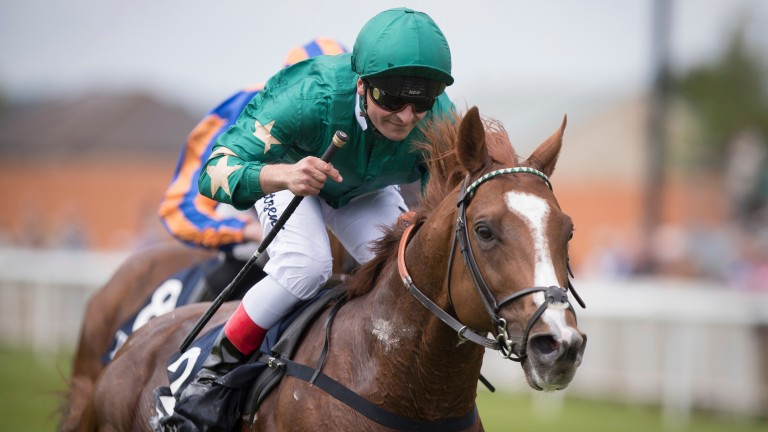 Decorated Knight: will start his stallion career at a fee of €15,000