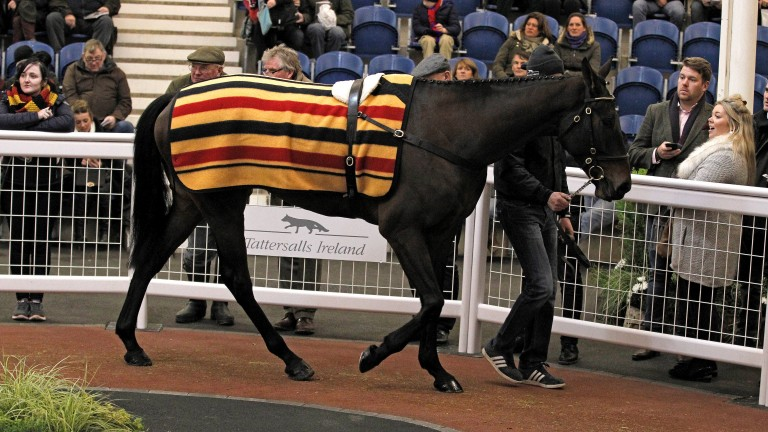 Trevelyn's Corn: the son of Oscar in the ring before being knocked down to Tom Malone for £400,000
