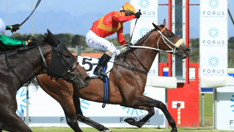 Tap O'Noth wins the Cape Guineas at Kenilworth