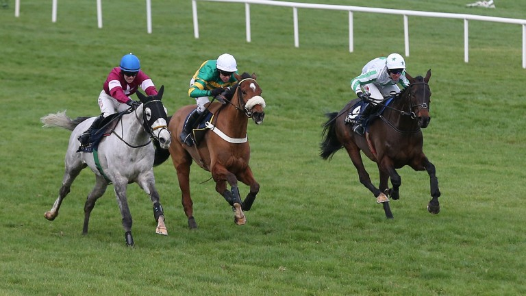 Our Duke (right): the Grade 1 winner is likely to make his return in the Irish Gold Cup next month