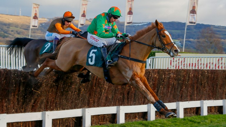Ms Parfois: makes a quick reappearance having won at Cheltenham on Friday