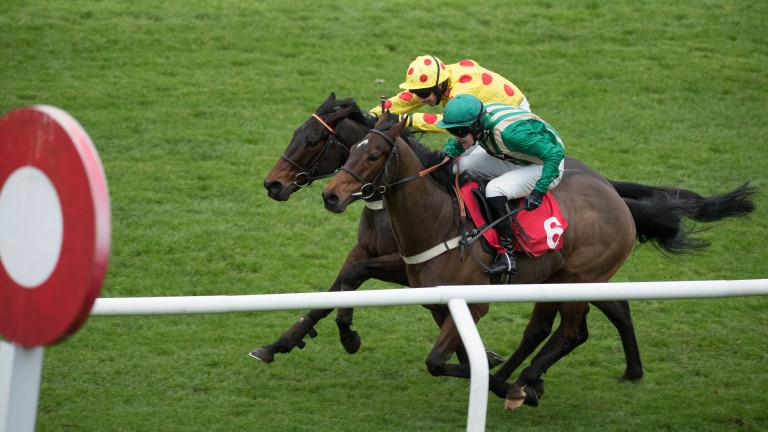 Good Man Pat (yellow colours) is set to run at Ascot on Friday