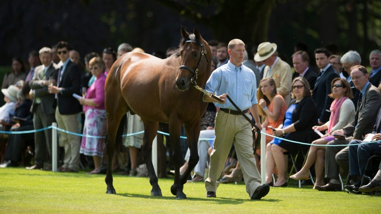 Teofilo being surveyed by his admirers at the Darley stallion parade