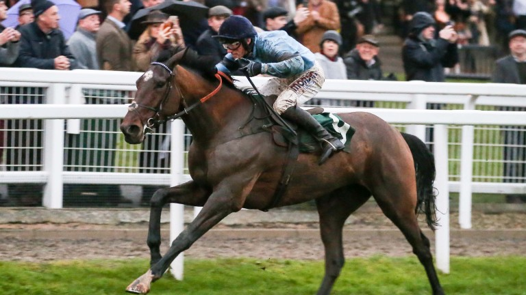 Posh Trish stays on strongly to win at Cheltenham