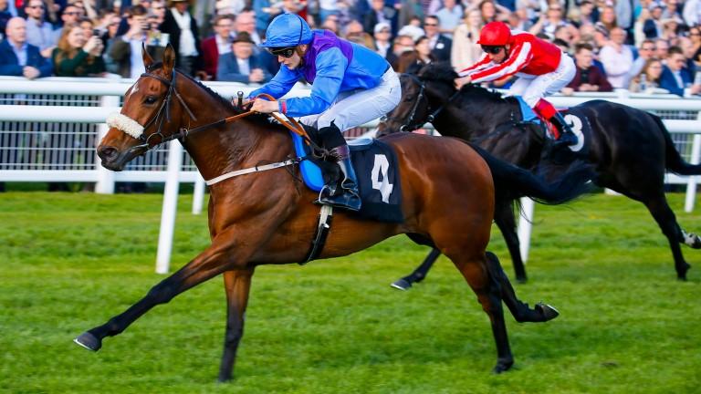 Duke Of Bronte: son of Reaf won the valuable Appletiser Handicap at Ascot in September