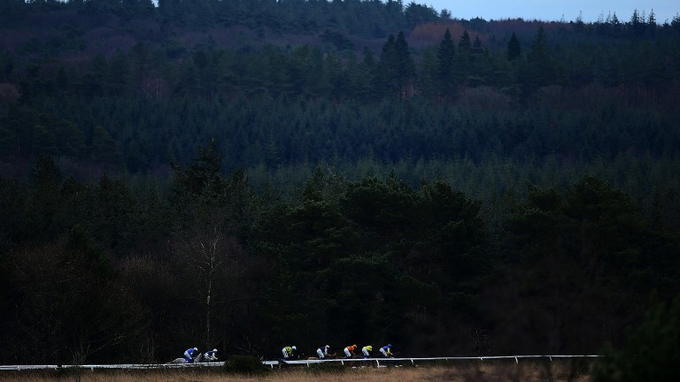 Haldon haven: runners in the opening mares' hurdle amidst the dark green backdrop of Haldon forest