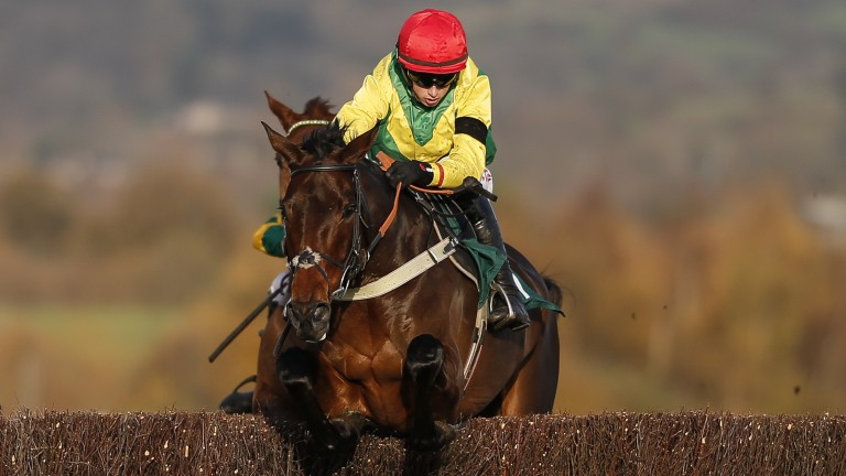 Finian's Oscar: will be aimed at the Stayers' Hurdle at the Cheltenham Festival