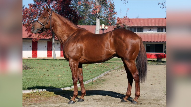 Grand Daddy: Scat Daddy's brother has sired 15 stakes winners
