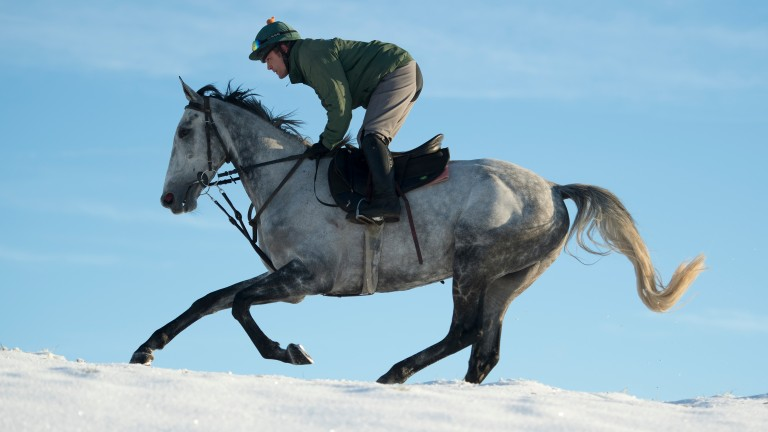 Bristol De Mai: looked awesome in the Betfair Chase