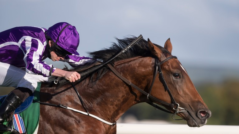 Saxon Warrior: winning the Beresford Stakes under Ryan Moore last year