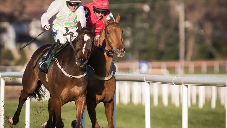 Horse racing: Simply Ned was awarded the Paddy's Rewards Club Chase in the stewards' room at Leopardstown over Christmas after impeding Min