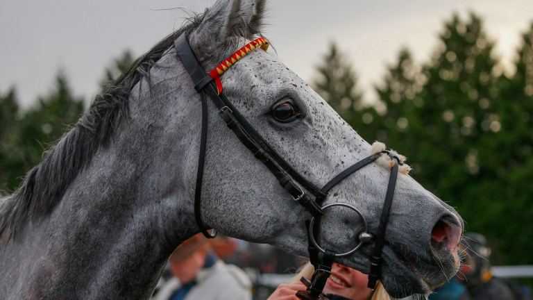 Fresh as paint: Politologue hardly looks like he's had a race following his victory in the Desert Orchid Chase