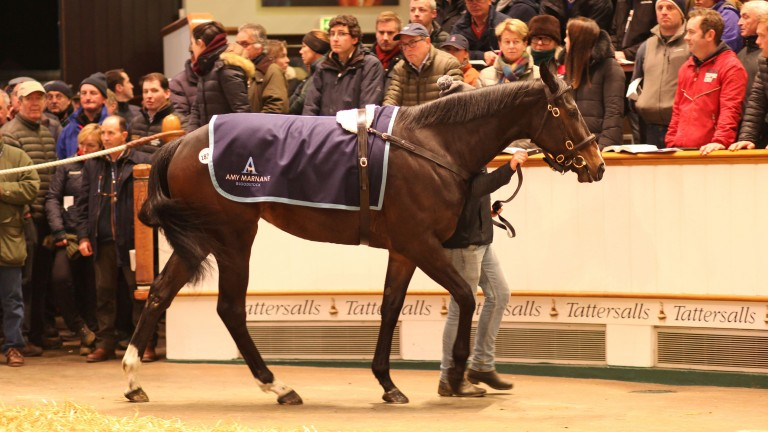 Different League in the Tattersalls ring before fetching 1,500,000gns from White Birch Farm and MV Maginer