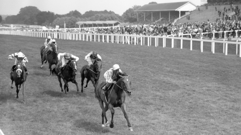 "Busted: ""the best Flat horse trained in Britain in the 1960s"""