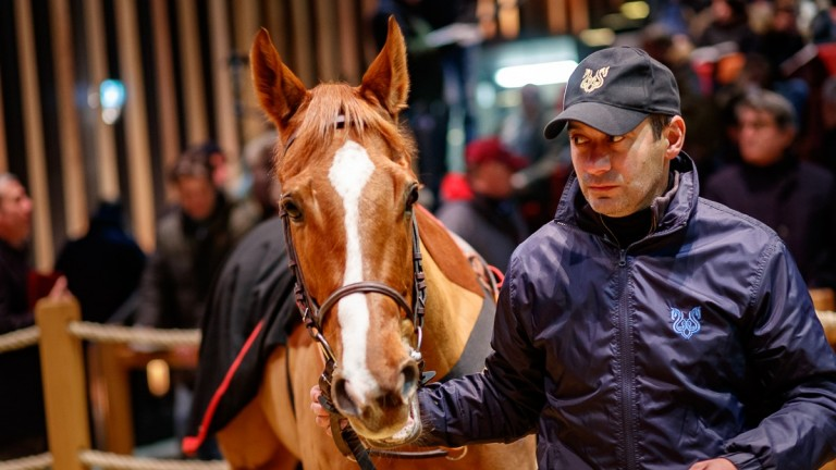 Haggle in the Arqana ring before being knocked down to the Wertheimer brothers for €1.3 million