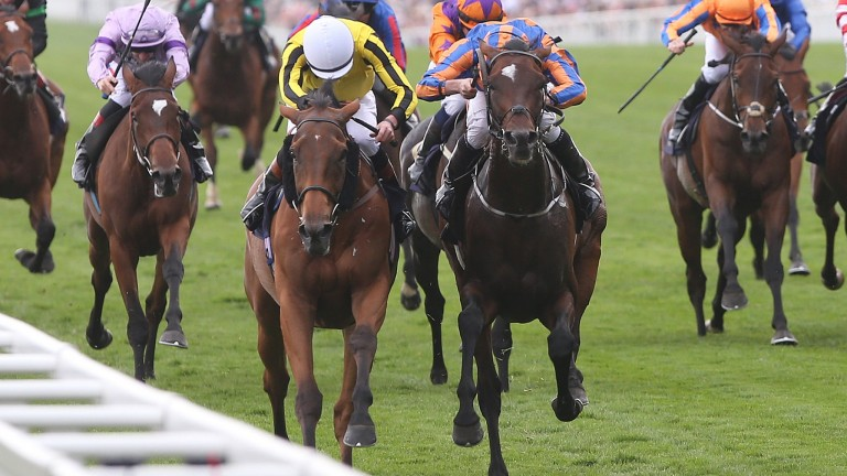 Big Orange (left of front pair) narrowly gets the better of Order Of St George to land last year's Gold Cup