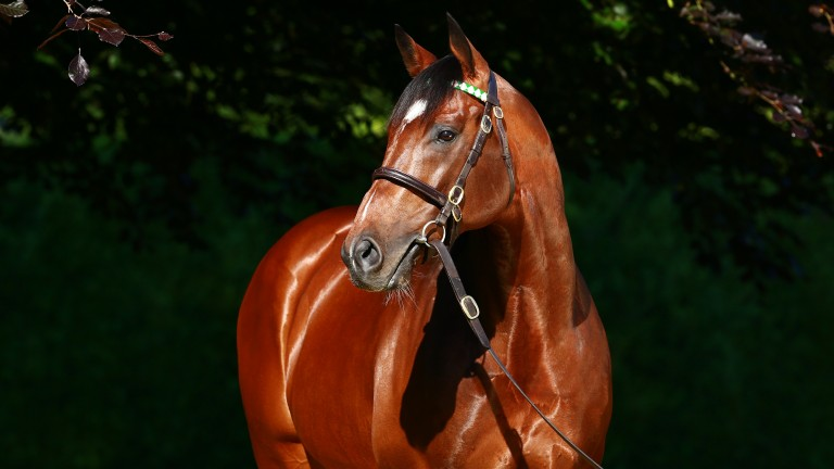 Frankel: will be represented at this year's breeze-up sales