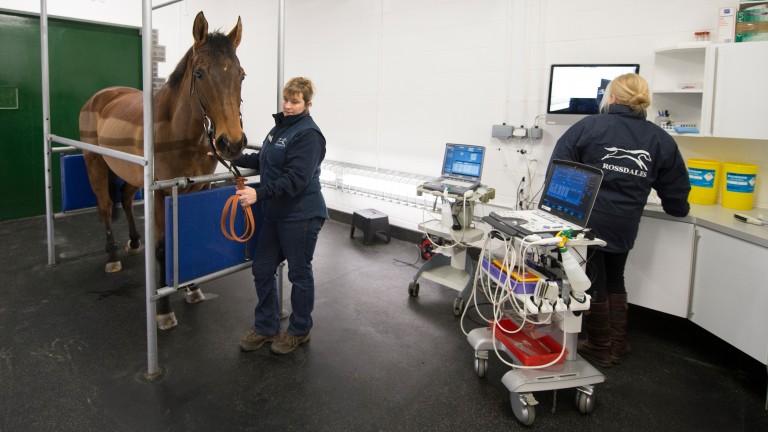 Professor Celia Marr (right) monitors Drombeg Pride's heart at Rossdales Equine Hospital
