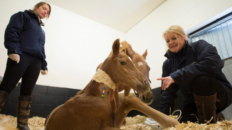 Celia Marr checks the progress of a four-day-old foal