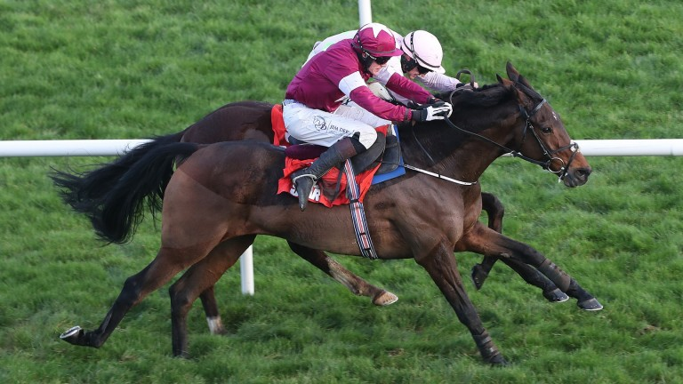 Hardback (near side) gets up to beat Low Sun in the Leopardstown novice hurdle