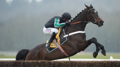 Ready for take-off: Altior looks a readymade replacement for the original black aeroplane, Sprinter Sacre, as he lands the odds in the Game Spirit Chase at Newbury
