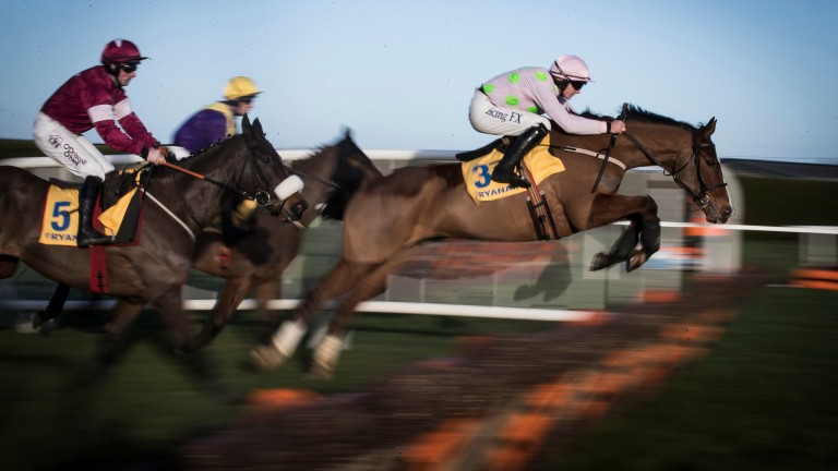 Faugheen (3): will be on a retrieval mission in the Irish Champion Hurdle