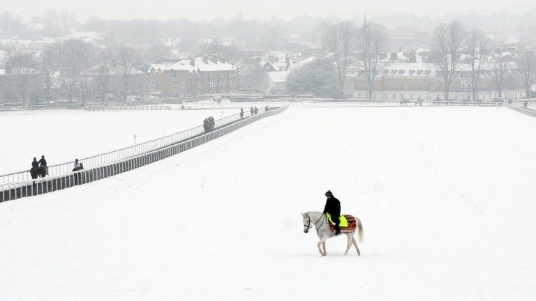 White on white: Watson riding William Haggas's stable hack on Warren Hill in January 2013, when he was Haggas's assistant