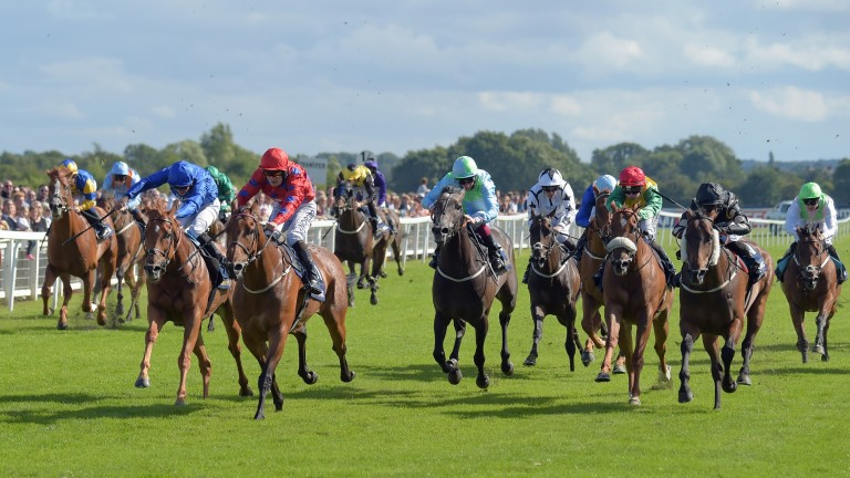 Intisaab (cheekpieces, right) finishes second in the 2016 Great St Wilfrid Handicap at Ripon