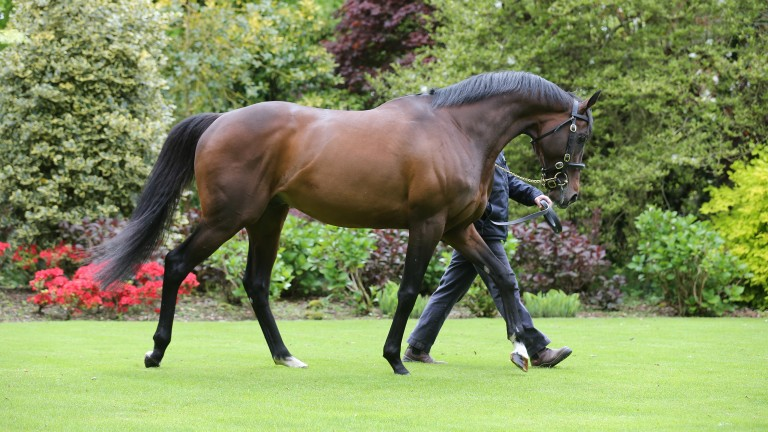 Camelot: already the sire of Group winners Fighting Irish and Wait Forever