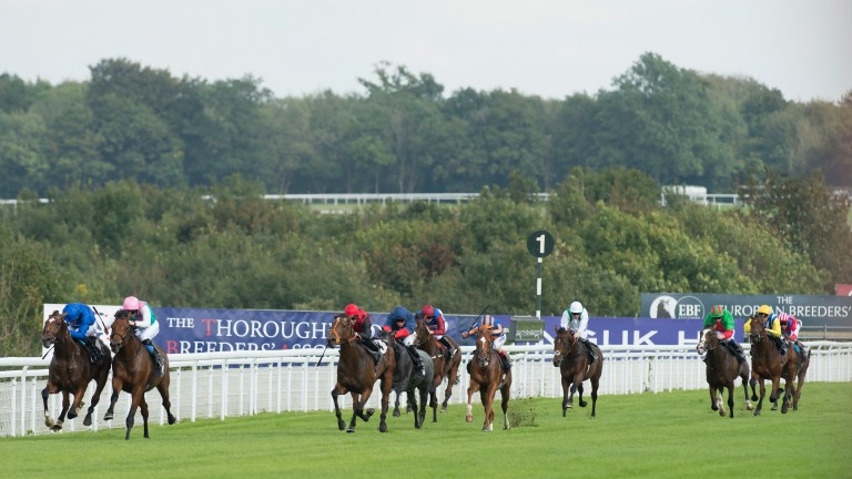 Sussex Ranger (second right) trails in behind winner Celestial Spheres on his debut at Goodwood