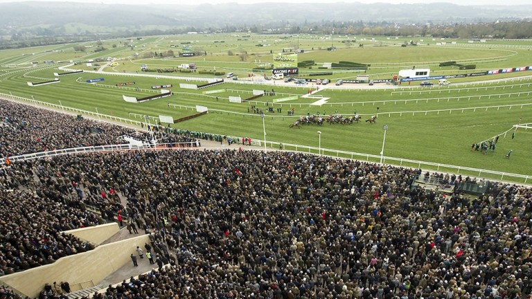 The Cheltenham Festival is the biggest event on the racing calendar, but barely registers on some online sports sites