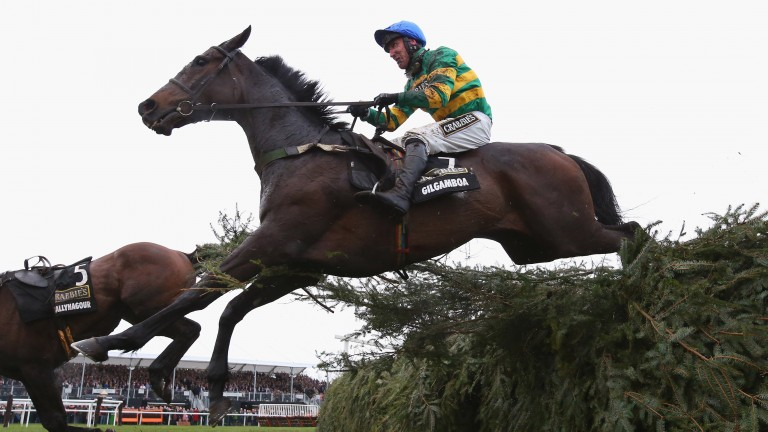 Gilgamboa, pictured on the way to fourth place in the 2016 Grand National, should do well in Ireland for Enda Bolger