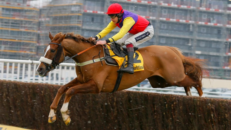 Native River: will miss Aintree with Gold Cup the main target