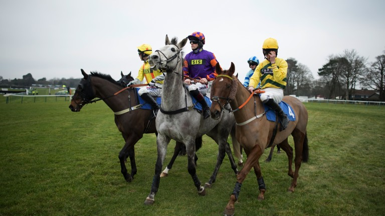 Ready to roll: Greyed A and Sam Twiston-Davies (centre) lead the field out onto the track for the 3m2f handicap chase