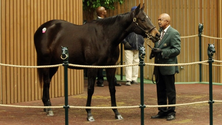 Stradivarius - in foal to Medaglia D'Oro - in the ring at Keeneland